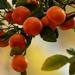 Kumquats Up Close!
