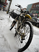 18th Jan 2020 - bicycle in the snow