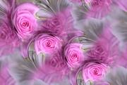 19th Jan 2020 - Rose blooms........