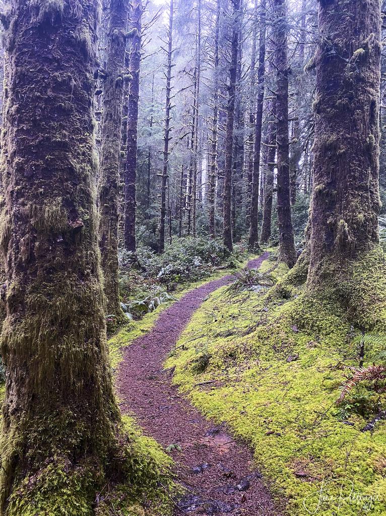 China Creek Trail by jgpittenger