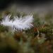 white feather.