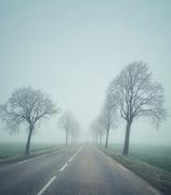 21st Jan 2020 - Frozen road.