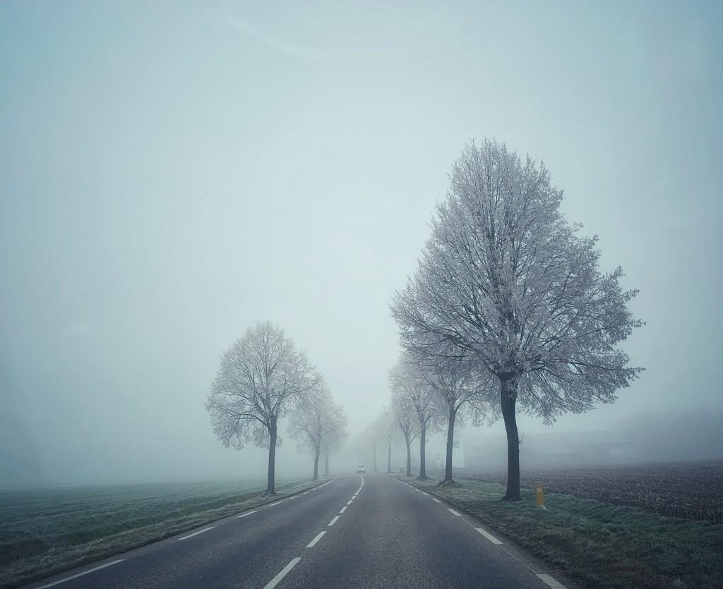 Frozen landscape.  by cocobella