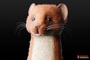 19th Jan 2020 - Weasel