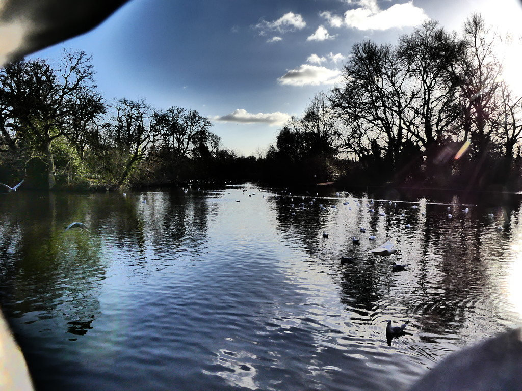 Tooting Bec Common Pond by snoopybooboo