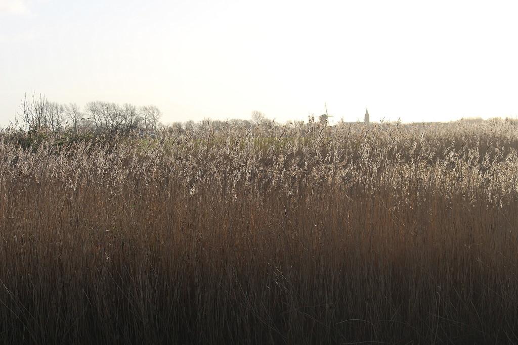 Reed. by pyrrhula