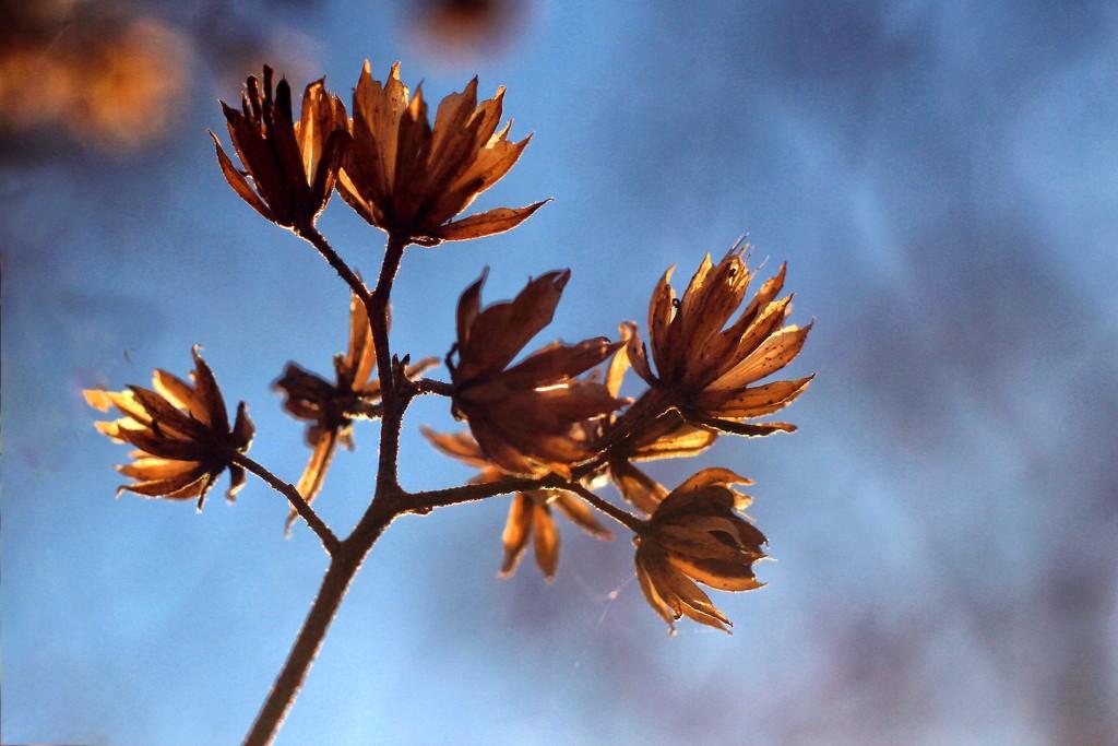Winter Weeds  by milaniet