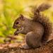 Bushy Tail Having a Snack!