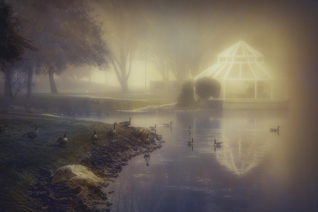 The Pond by joysfocus