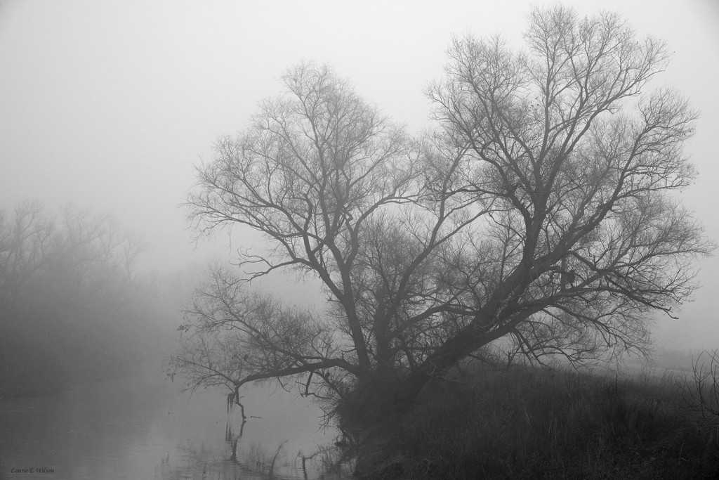 Foggy Trees Colusa County by laurieewilson