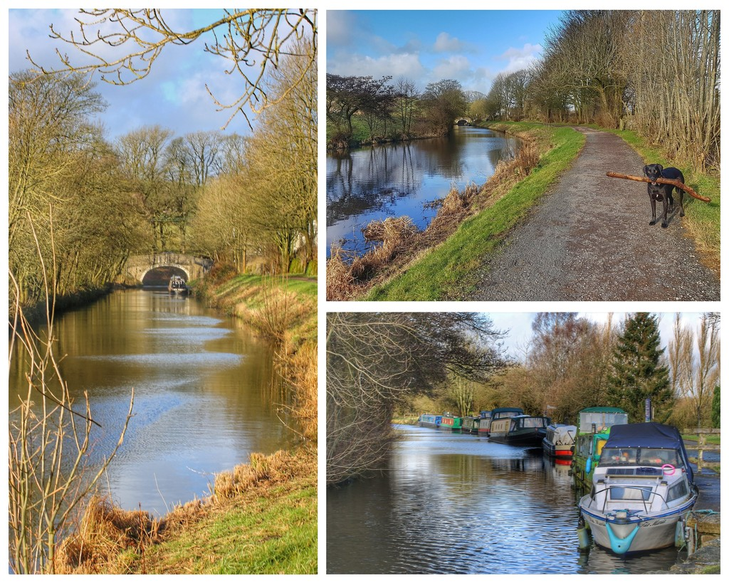 A nice stroll down the canal towpath  by lyndamcg