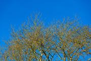 20th Jan 2020 - Blue Sky