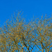 Blue Sky by lifeat60degrees