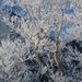 Ice coated trees with the dark mts behind it by skr44aolcom