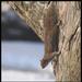 Squirrel at play