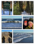 20th Jan 2020 - Monday walks, woods & beach