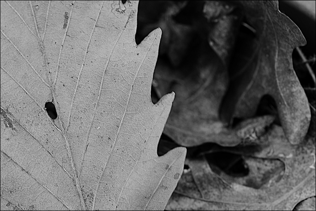 Leaves in a Flowerpot by olivetreeann