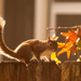 Squirrel Showing Off it's Tail! by rickster549