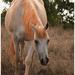 Ex Ton Quilpy race horse