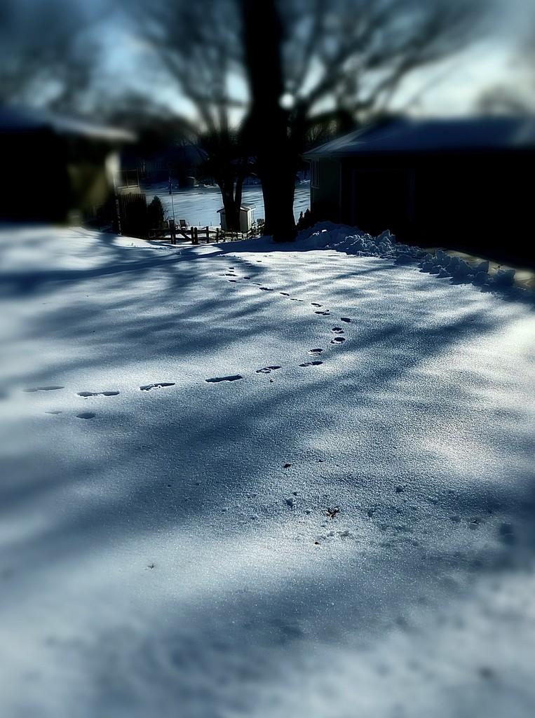 winter blues by vankrey