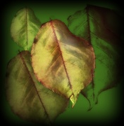 21st Jan 2020 - A leaf's day..