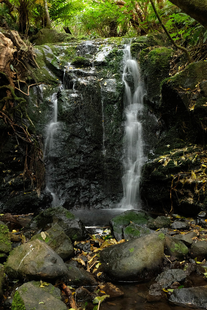Waterfall in Hinewai reserve by maureenpp