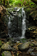 21st Jan 2020 - Waterfall in Hinewai reserve