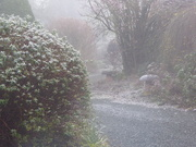 20th Jan 2020 - A cold and frosty morning ..