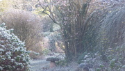 16th Jan 2020 - Another cold morning