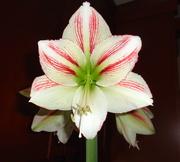 21st Jan 2020 - Blooming helping winter seem like spring.