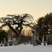 Y11 0121 Tree by cirasj