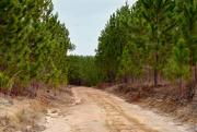 19th Jan 2020 - Church Trail through Sandhills