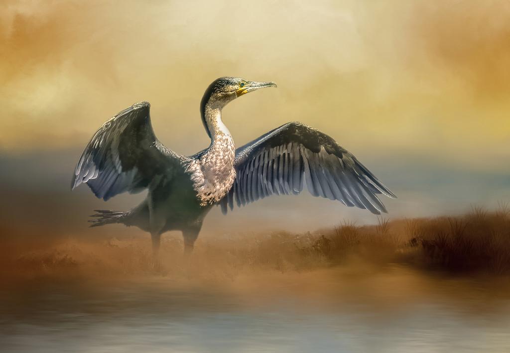 Cormorant    by ludwigsdiana