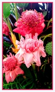 18th Jan 2020 - Torch Ginger