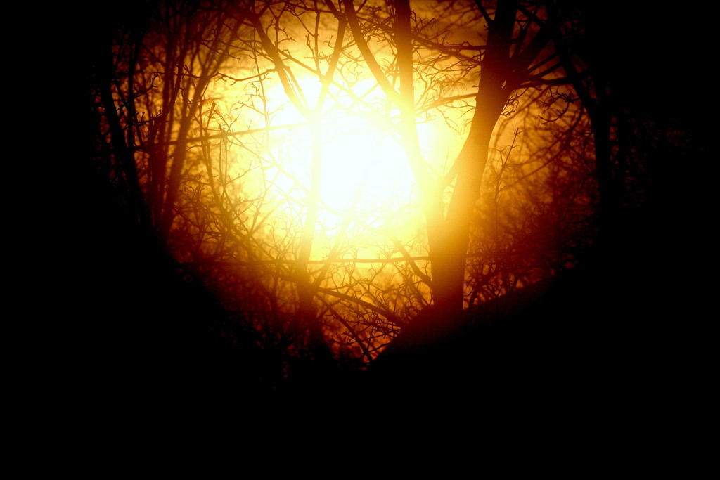 Heart shaped sunflare by bruni