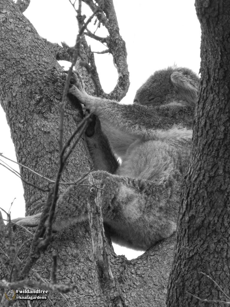 leg stretching by koalagardens