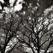 Sky Lace by vignouse