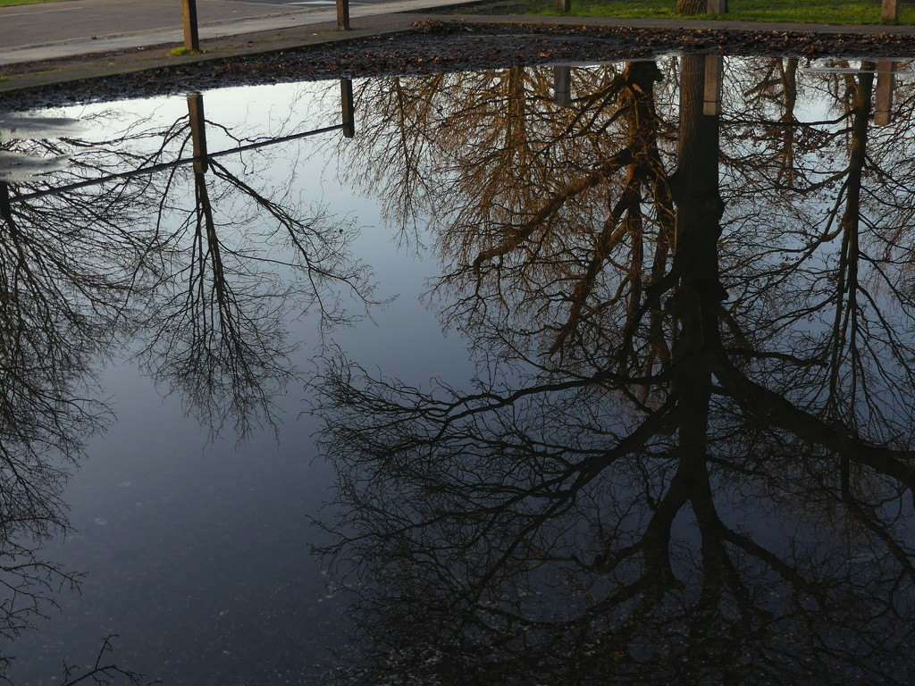 A Tree Reflection by snoopybooboo