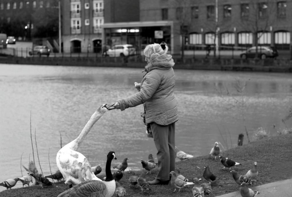 100 Stranger Extra Photo : Anne Feeding The Birds by phil_howcroft