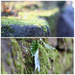 Trying shallow dof with my new lens, the nifty fifty!