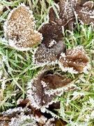 18th Jan 2020 - Frosty morning
