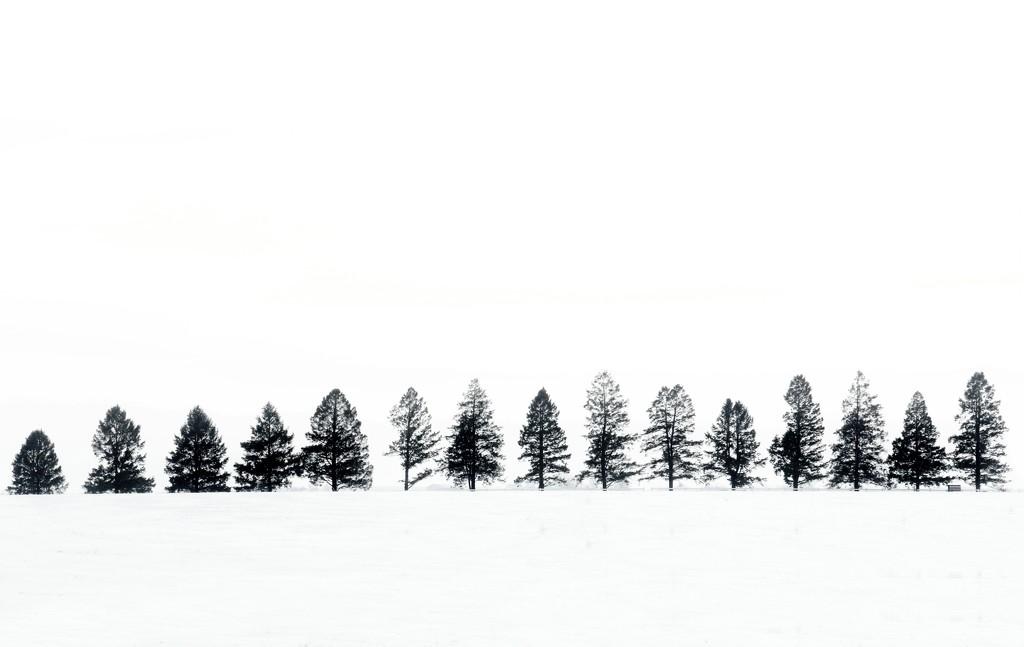 Winter by lynnz