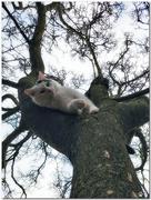 23rd Jan 2020 - Joshi in the Magnolia tree