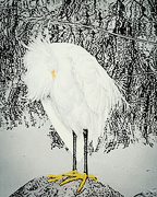 23rd Jan 2020 - Miss Egret Takes A Bow