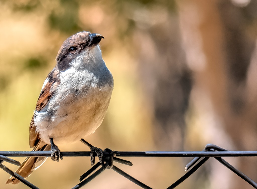 Bird on a wire by ludwigsdiana