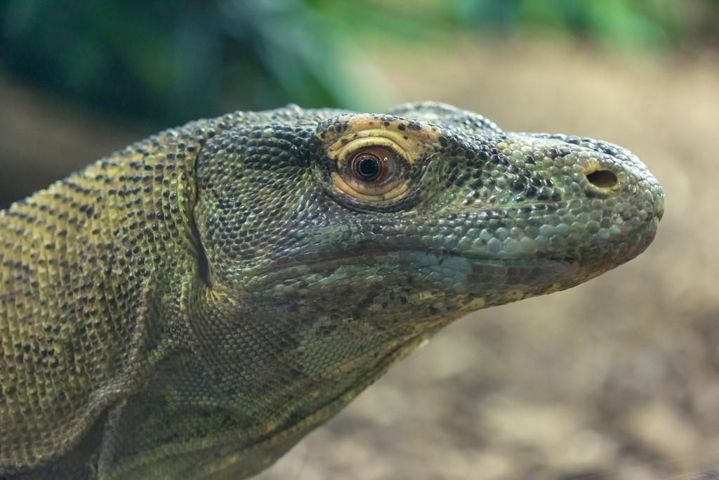 Komodo Dragon Green by kph129