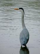 23rd Jan 2020 - Spiky Beak and Head Feathers