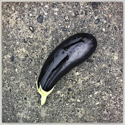 5th Jan 2020 - Eggplant in transit
