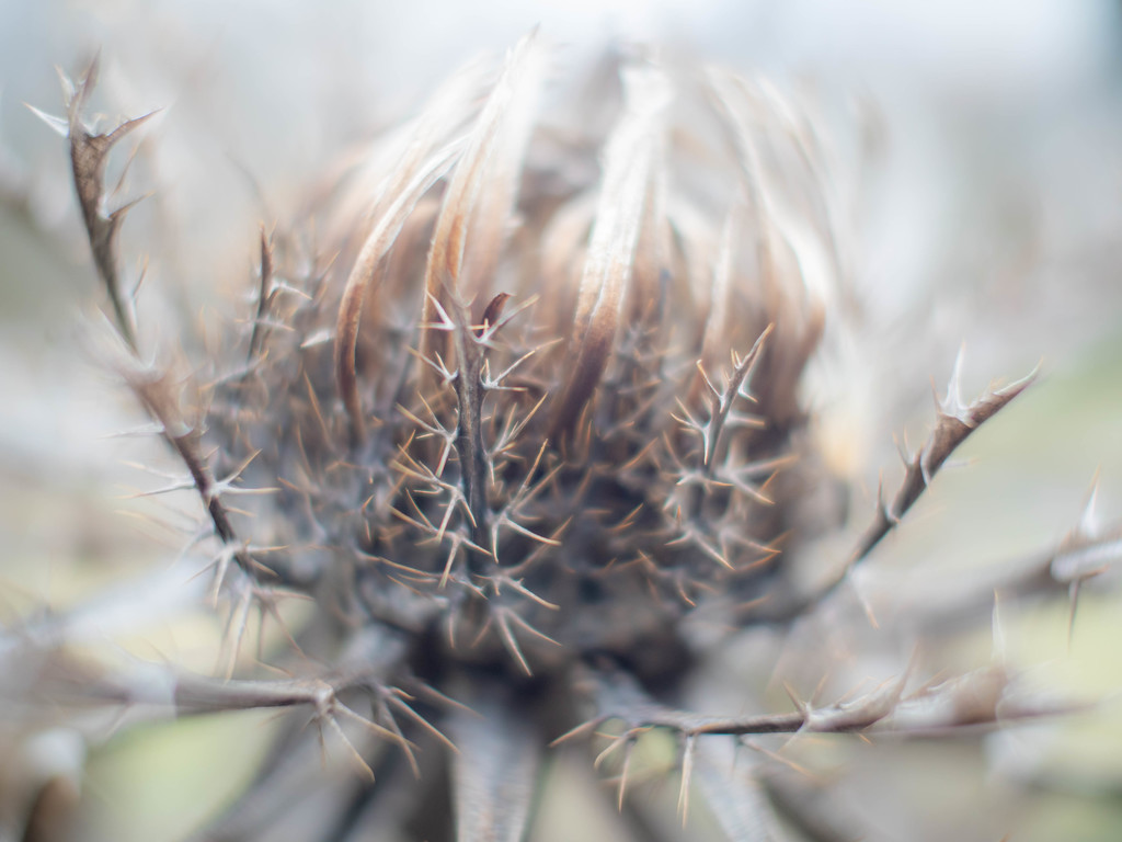 The spiny leaves  by haskar