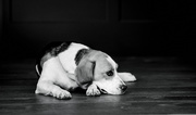 19th Jan 2020 - Sunday puppy